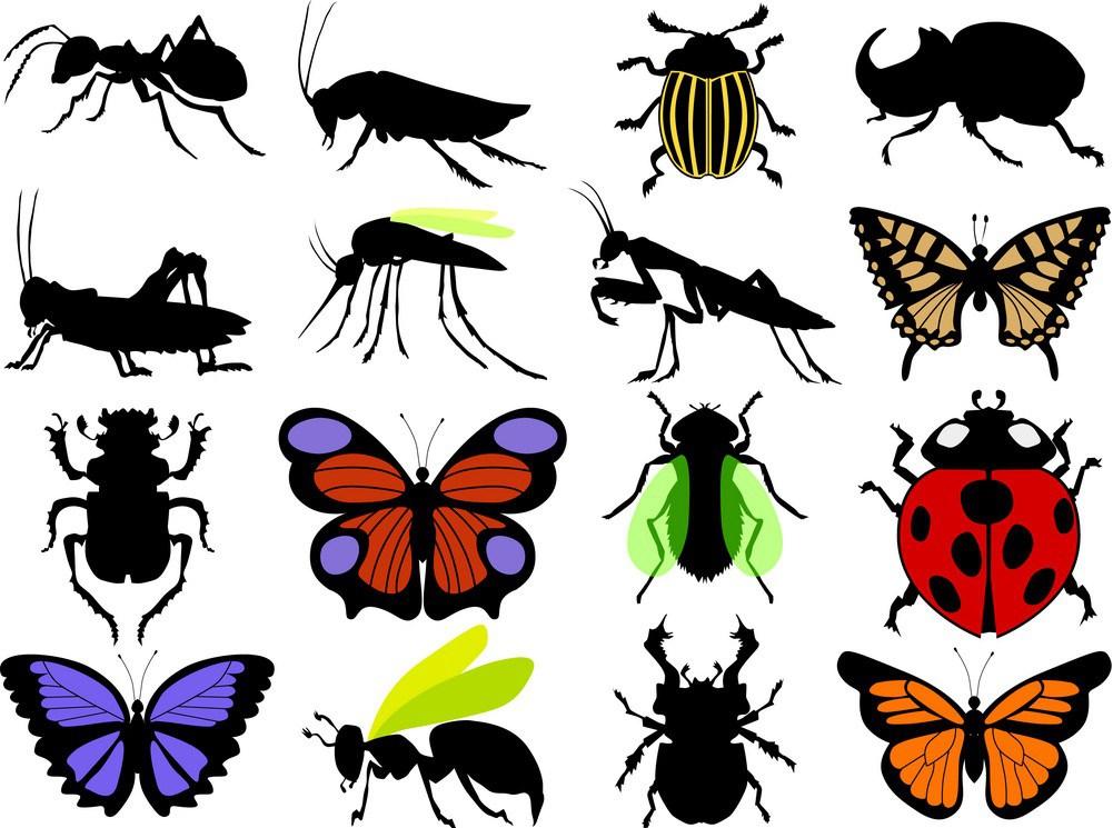 شركه مكافحه حشرات بخميس مشيط