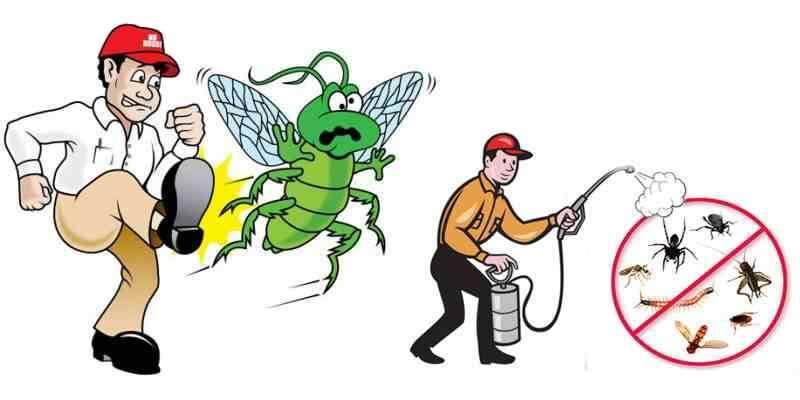 شركه مكافحه حشرات ببيشه