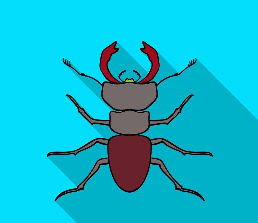 مكافحة النمل الأبيض بخميس مشيط