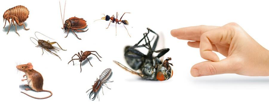 شركة مكافحة حشرات باابوعريش